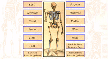 skeleton tutorial