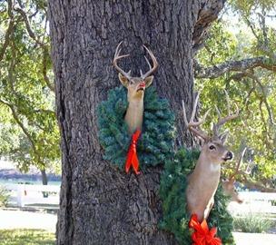 Rudolph on Tree