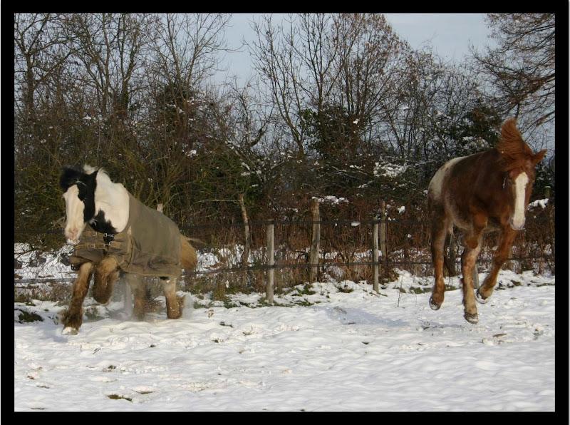 Le cheval et la neige, gagnant : Chris - Page 3 Cc%20copie