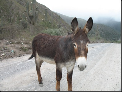 Esel i veien
