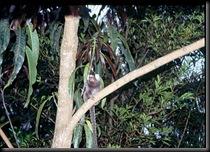 Paraty - apene fulgte med hele tiden