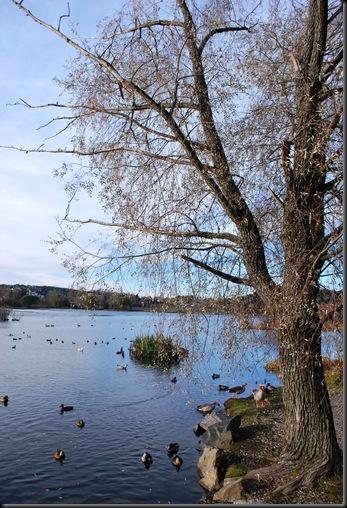 Østensjøområdet miljøpark