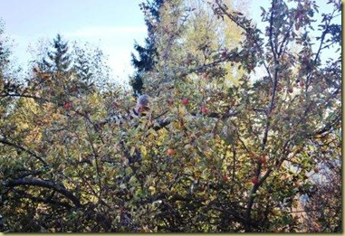 2010-10-16 - Summerhouse - Apple Tree Seb on top 1