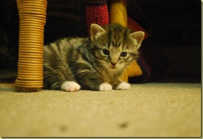 Kitten - am I sweet
