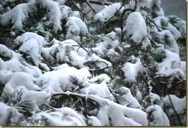Foggy and frosty Sunday - snow on branches