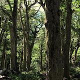 Forest on Cerro Faulkner