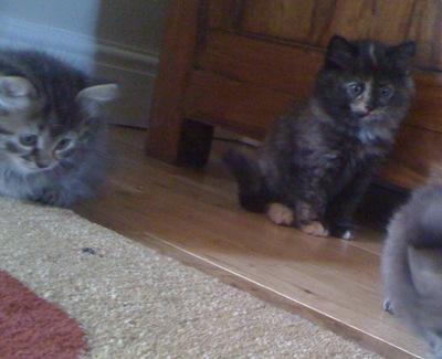 cat-pics-20.092010-032