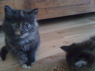 cat-pics-20.092010-021