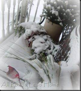 Snowy Days2