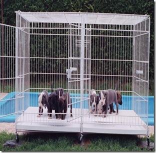 PetsVentura Wire Kennel