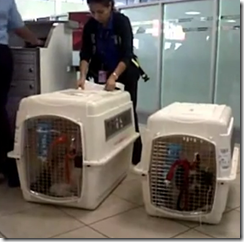 airportdogs