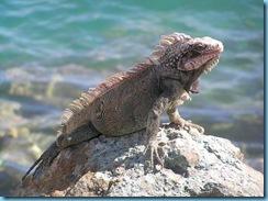 iguana 002_Vga
