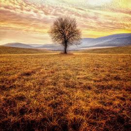 Tree of life by Pinc Csépe-Káldy - Landscapes Prairies, Meadows & Fields ( clouds, sky, nature, tree, colors, nikon, landscape )