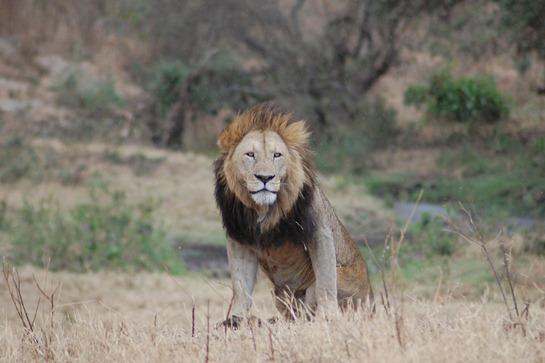 ngorongoro_conservation_area_-_tanzania