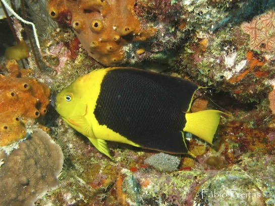 7-Bonaire sub copy