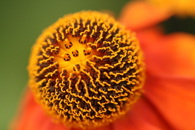 09 September Helenium