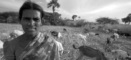 9206 Farming India Keelakottahi goat-farmer Sungarampatty village Tamil Nadu