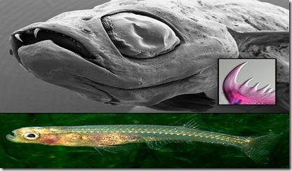 2009-03-12-dracula-fish-01