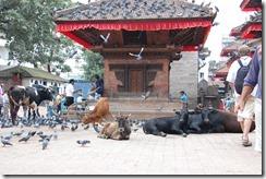 Nepal 2010 -Kathmandu, Durbar Square ,- 22 de septiembre   63