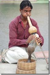 India 2010 -   Jaipur - Fuerte  Amber , 15 de septiembre   12