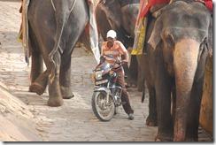 India 2010 -   Jaipur - Fuerte  Amber , 15 de septiembre   50