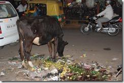 India 2010 -  Jaipur , paseo nocturno por el mercado , 15 de septiembre   33