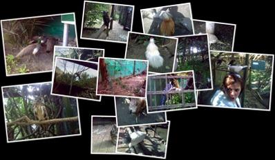 View Bird Park