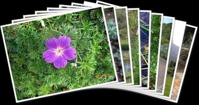 View Kirstenbosch Gardens
