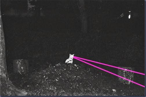 cat,cute,kitty,lasers,silly-5cd3319312ab15695a147fe91beedd9b_h