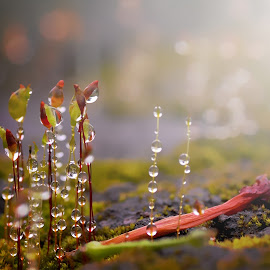 moss spores by Dy Djoenaedy - Nature Up Close Natural Waterdrops