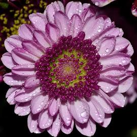 by Vishal Bhatnagar - Flowers Flowers in the Wild