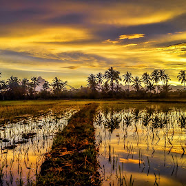 Refleksi Sawah 2 by Randi Pratama M - Instagram & Mobile Android ( clouds, field, reflection, indonesia, sunset,  )
