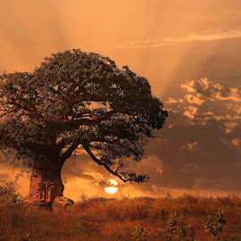 Baobab Tree by Mohamed Sabry - Digital Art Places ( old, baobab, tree, dakar, senegal,  )