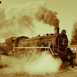 Old Steam Train by Nici Pelser - Transportation Trains ( sepia, old trains, steam train, transportation, trains )