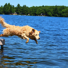 Jump! by Lauren Margraves - Animals - Dogs Playing ( jumping, puppy, lake, dog, dock )