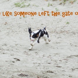 Live Like Someone Left the Gate Open! by Jennifer McWhirt - Typography Captioned Photos ( dogs, photographybyjenmcwhirt.com, dogs running, cavalier king charles spaniel, typography )