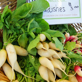 Radishes by Charles Ward - Food & Drink Fruits & Vegetables