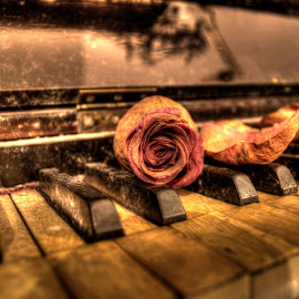 by Alexandru Brindusoiu - Novices Only Objects & Still Life ( rose, keyboard, piano, still life, roses )