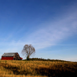 The Barn by Larry Scott - Buildings & Architecture Other Exteriors ( field, farm, red barn, barn, rural )