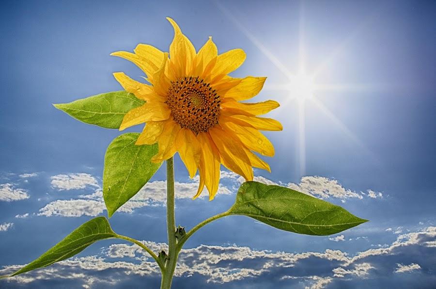 by Albin Bezjak - Flowers Single Flower ( Hope )