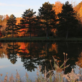 by Todd Reynolds - Landscapes Waterscapes ( fall, color, colorful, nature )