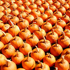 Pumpkins for sale by Tony Moore - Abstract Patterns ( abstract, patterns, pumpkin, pumpkins, patttern, design,  )