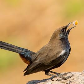 Win the Toss.. by Mukesh Chand Garg - Animals Birds (  )