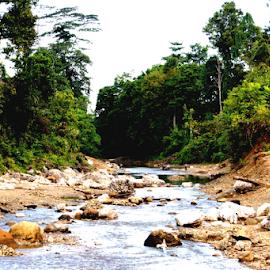Gau River at Buli Jungle Halmahera by Saatdul Ibat - Landscapes Forests (  )