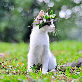 the flower crown by Noor Helmie - Animals - Cats Kittens