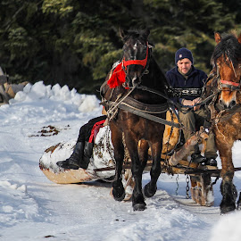 Woodcutters by Cristi Rus - People Professional People ( winter, wood, woodcutters, horse, people )
