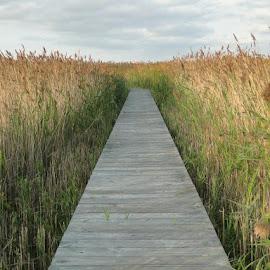 On the Boardwalk by Sherri Hillman - Landscapes Beaches