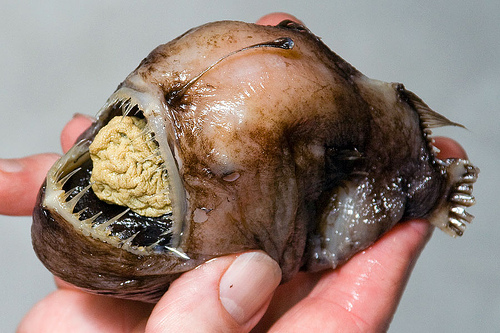 Las criaturas marinas mas extrañas