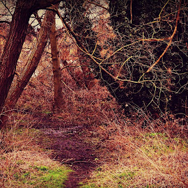 Muddy Woods by Stephen Avery  - Nature Up Close Trees & Bushes