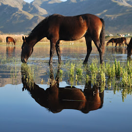 Wild Horses in Kleinmond by James Craythorne - Animals Horses